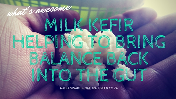 Milk Kefir with a pinch of Science