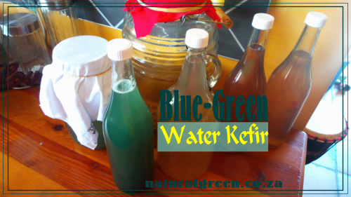 Blue-Green Water Kefir