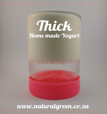 Natural Green - Thick Home made yogurt